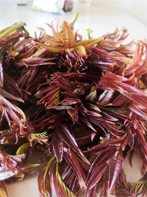 正是吃香椿的季节,那么香椿芽怎么做好吃呢?