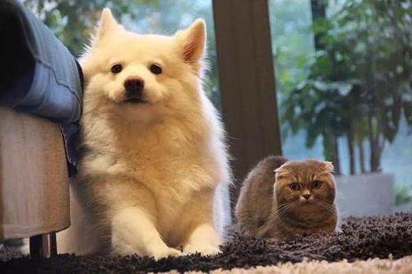 中信银行宠物主题信用卡值得申请吗?高萌宠物卡了解一下!
